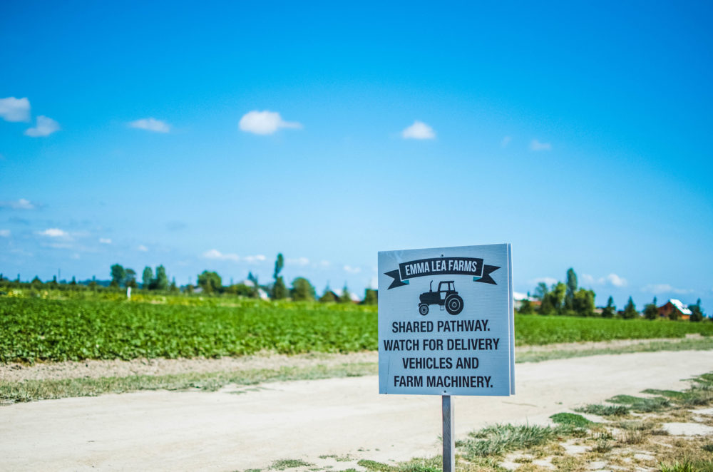 A quick 30 minute trip from Vancouver, visit Westham Island for a quaint farming community experience in Delta, BC.