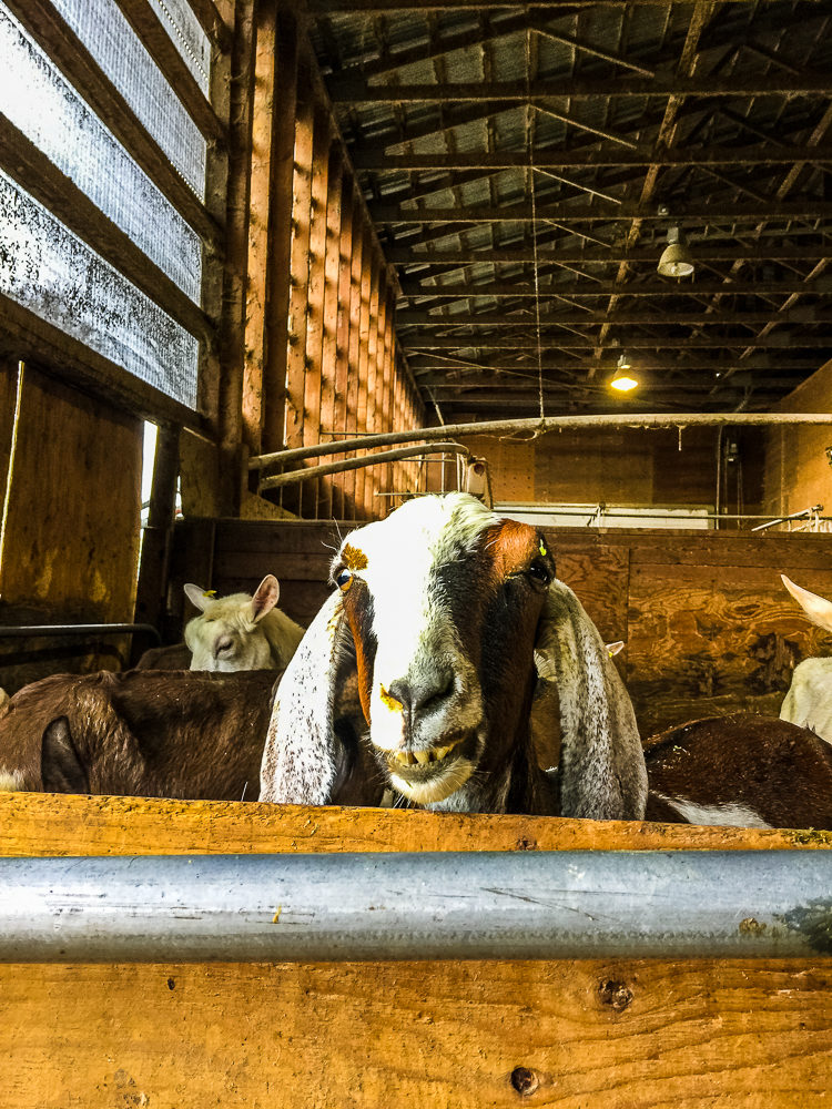 Farmhouse Natural Cheeses | Harrison Mills